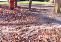 Footprints of Cottage Ave. runoff (view SSW from entrance path).